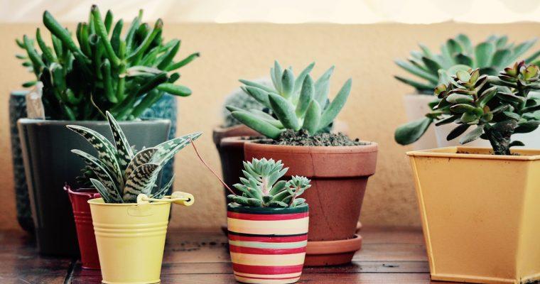 Al je planten op de juiste plek